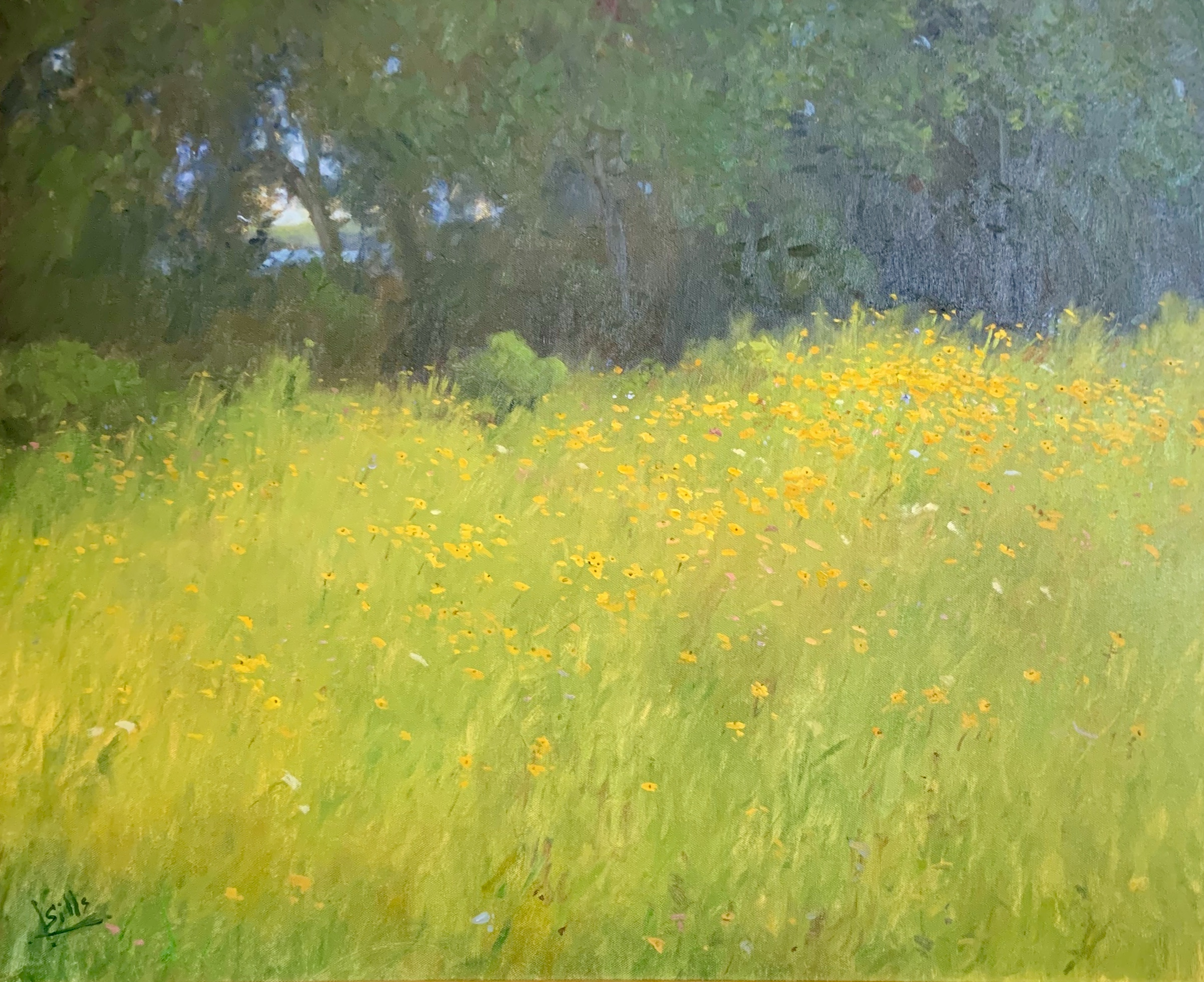 Field of Susies-Sills, oil 30x24 $7200