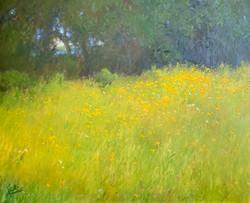 Field of Susies-Sills, oil 30x24 $7200