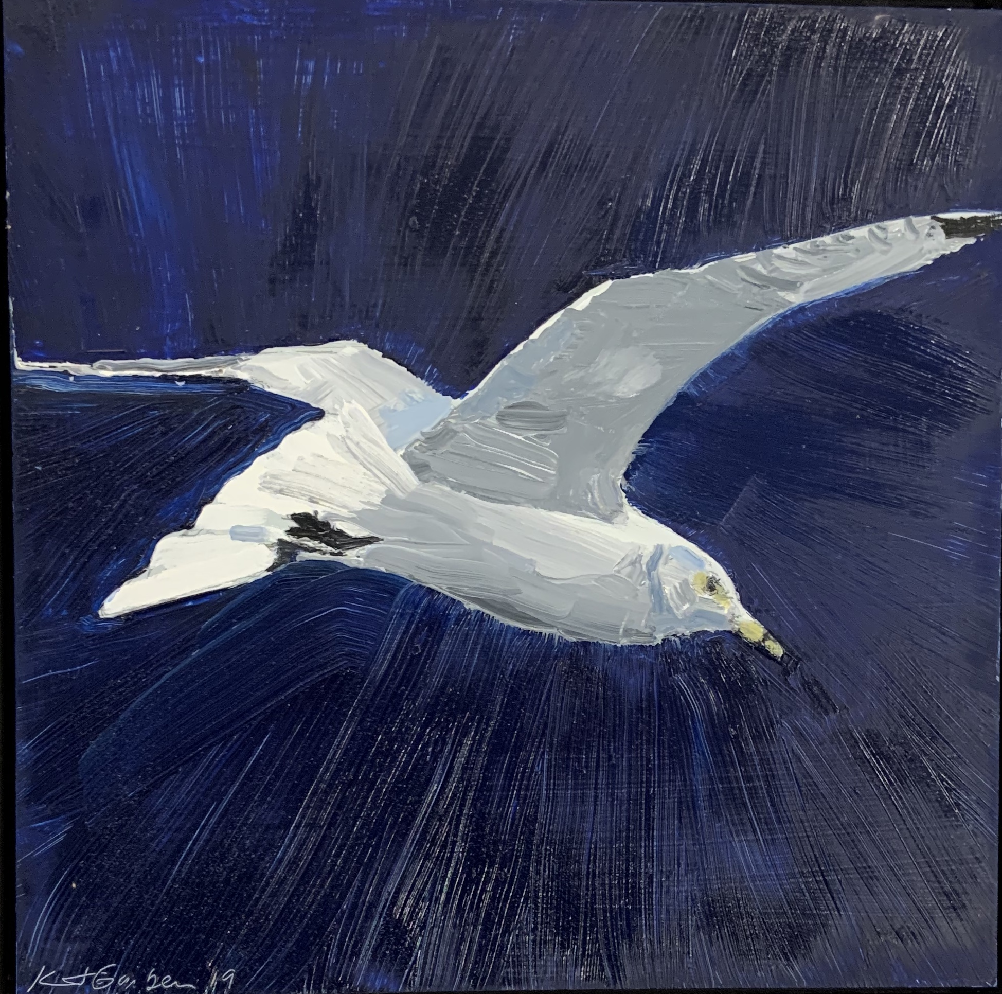 Royal Tern, oil 12x12 $900