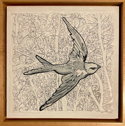 The Tatoo Swallow, ink_watercolor 12x12 $425