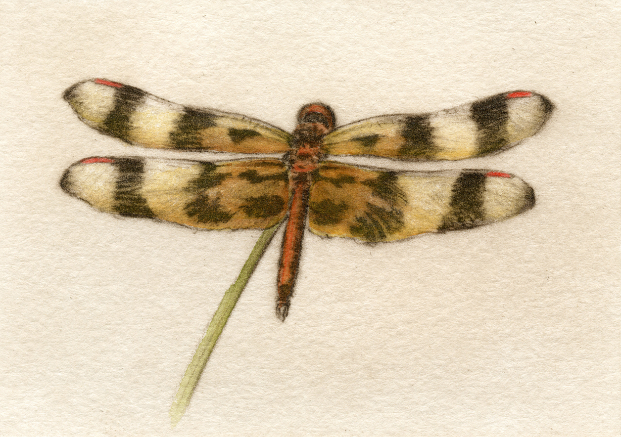 Halloween Pennant-Fain, watercolor/etching
