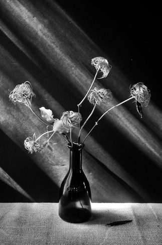 After the Petals Have Fallen by Nanny Trippe, archival digital photograph, 18x24 $285