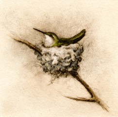 Nesting Hummer, Fain watercolor etching $325