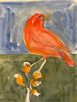 Cardinal, watercolor 11x14 $375