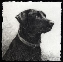 Best Friend-Fain, watercolor/etching $425