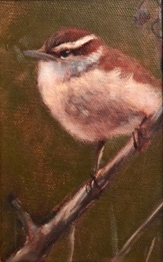 Carolina Wren, Waterman,oil 6x4 $375