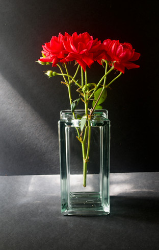 Roses Are Red by Nanny Trippe, archival digital photograph, 16x20 $185