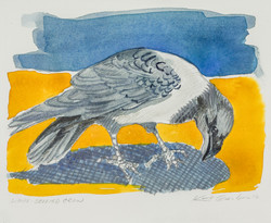 White Bellied Crow, watercolor $325