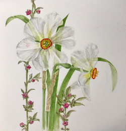Daffodils and Almond-D'Zmura, watercolor