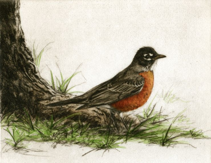 Robin, Fain watercolor etching $450