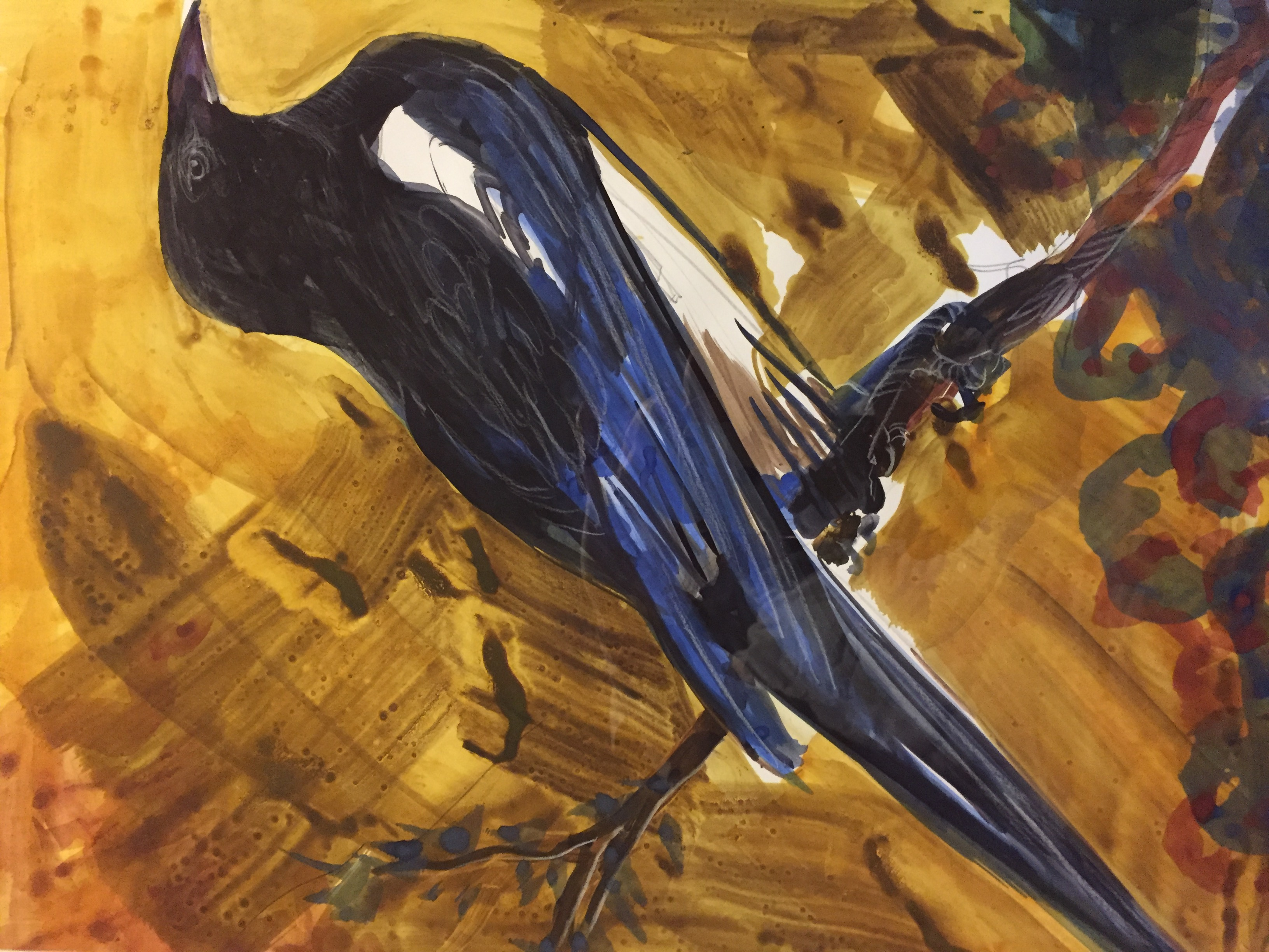 Magpie-Garber, watercolor $750