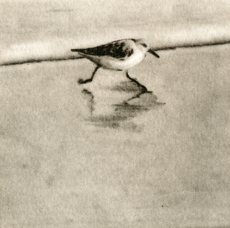 Sanderlings III-Fain, watercolor/etching