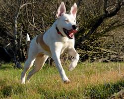 UncleDavesPetCare_leapingdog