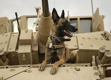 dog-1174482_640.jpg