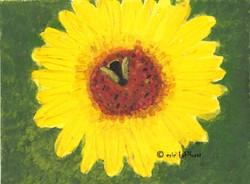 Bee ... Believe in Mircles