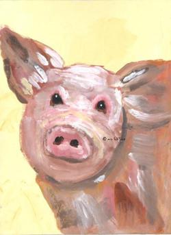 Pig ... Abundance