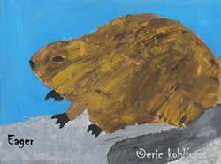 Beaver ... Eager