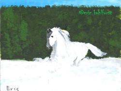 Horse ... Freedom