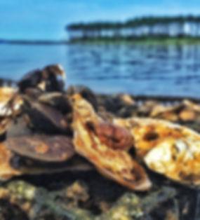 oyster 1.jpg