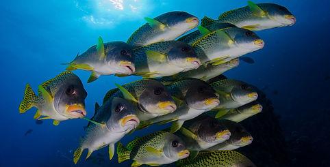 banc-de-poisson.jpg