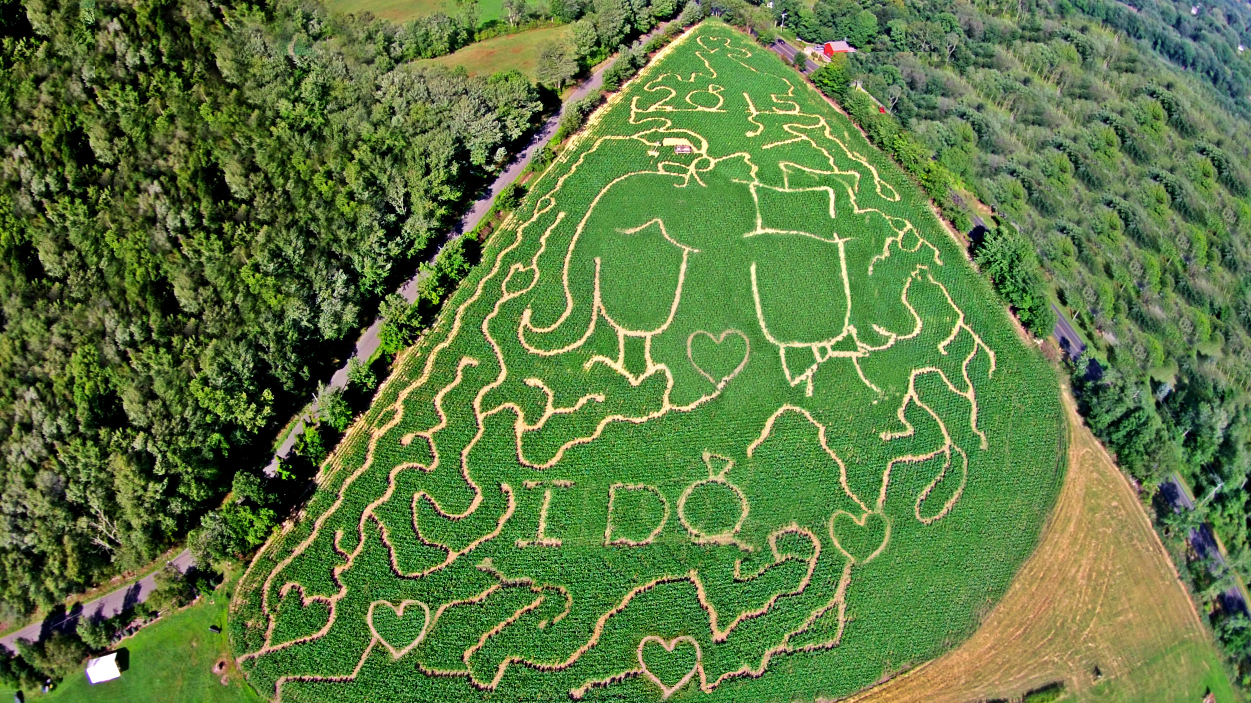 "2015 ""I Do"" Corn Maze"