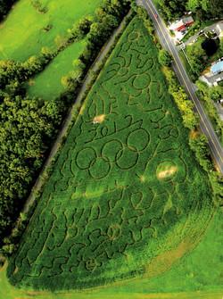 """2012 """"Olympic"""" Corn Maze"""