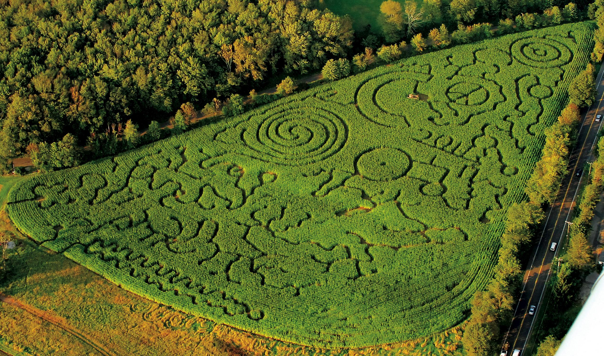 "2011 ""C"" Corn Maze"