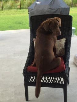 tina dog1