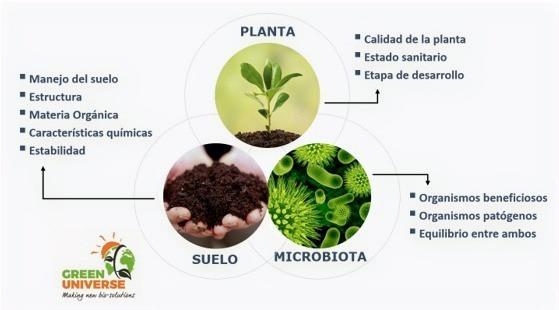 Interacción suelo planta microbiota