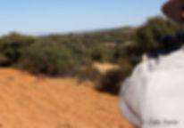 Un venado irrumpe en el cortadero(Fotografía: Gonzalo Varas Romero)