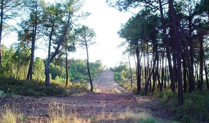 En los caminos y pistas forestales se debe utilizar el mismo sistema que en cortaderos (Fotografía: Santiago Segovia Pérez)