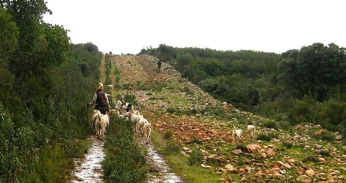 Una rehala atraviesa el cortadero y los monteros se cambian a la posición de enfrente (Fotografía: Santiago Segovia Pérez)