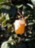 FLYTRAP 2   GREEN UNIVERSE AGRICULTURE