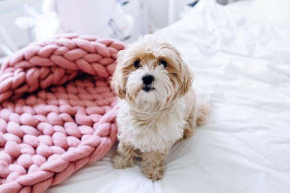 Pink knit blanket