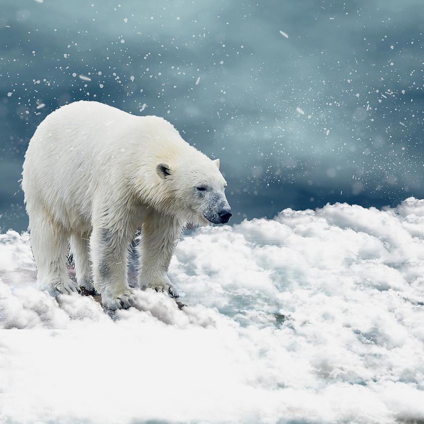 Kinderworkshop: Expedition zur Arktis!