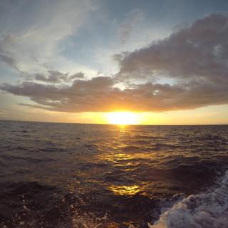 Luxury Boat Charter,  Dolphin, Manta, Kealakekua Bay