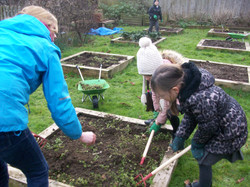 Allotment digging 2