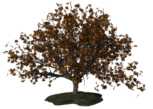 tree-1606494_640.png