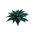 plant-3988828_640.png