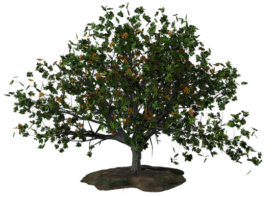 tree-1606498_640.png