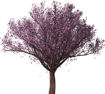 cherry-blossom-tree-3321157_640.png