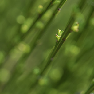 Pflanze3