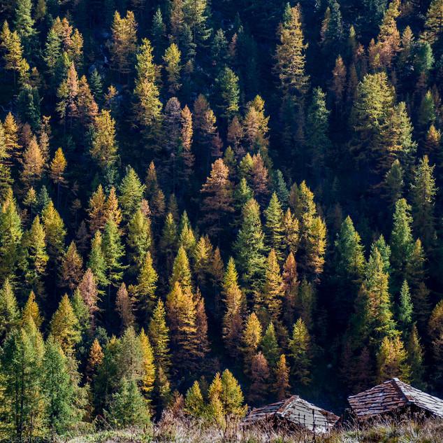 Landschaft17