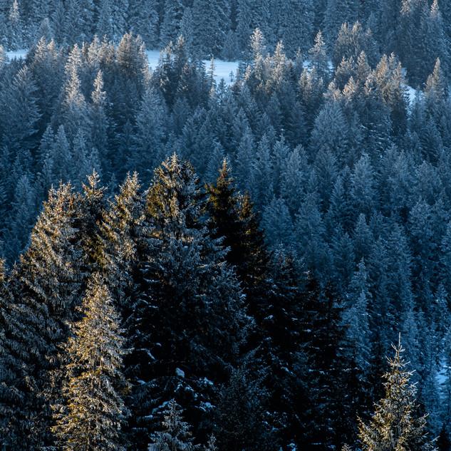Landschaft4