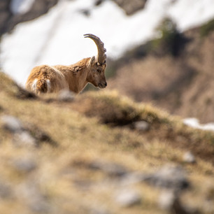 Tiere3