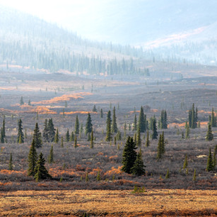 Yukon13