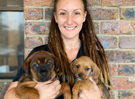Cuddle an Animal Rescue Qld puppy at Collies & Co Samford.