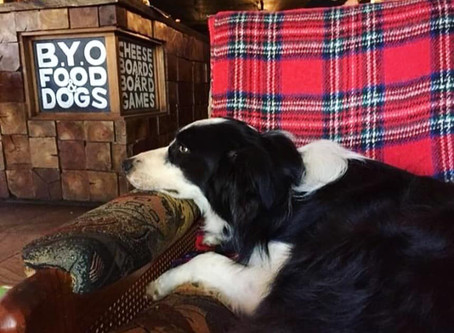 Dogs and Pubs Brisbane - perfect in the rain