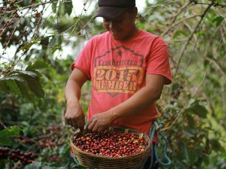 17) Meksika Kahvesinin Özellikleri