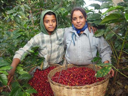 15) El Salvador Kahvesinin Özellikleri